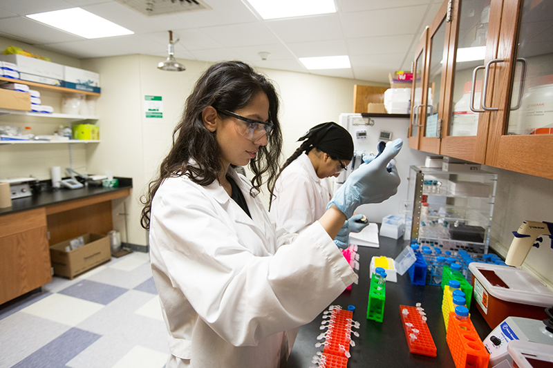 Students work in the biochemistry lab at Adelphi